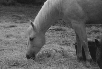 3 Harvey grazing in black and white